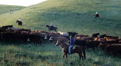 Doublerafter Cattle Drives Video